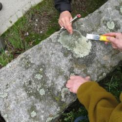Students sampling lichens.