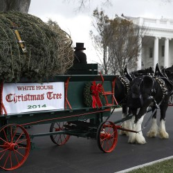 Palin criticizes Obama holiday card and the dog