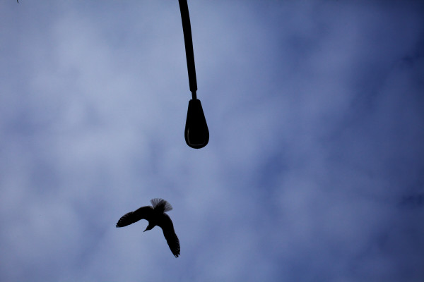 A gull takes flight from atop a light pole near Post Office Park in Portland on Monday.