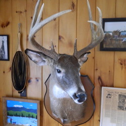 Big Allagash deer still memorable