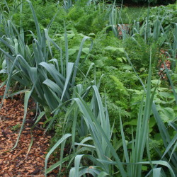 Diversity is key to planting vegetables