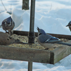 Belly up, birds: The feeders are full