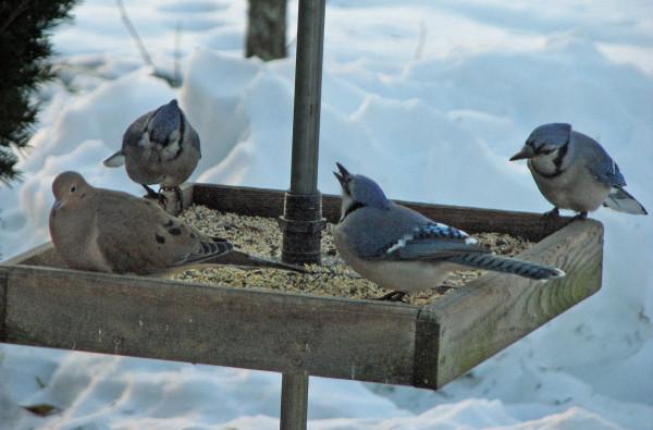 ¡Ayuda! ¡Los pájaros pequeños nos están comiendo fuera de casa y de hogar!   Raíz simple