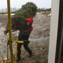 Military families to receive free trees for Christmas