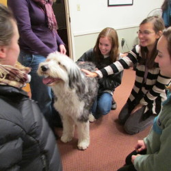 Volunteer dogs help UMaine students relax, relieve stress of final exams