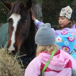 Cape Elizabeth girl, 12, saves two young horses from slaughter