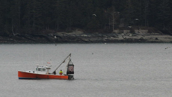 A boat drags for scallops in upper Frenchman Bay near Lamoine on Monday. This was the first day of scallop fishing season, which goes through the end of April 2015.