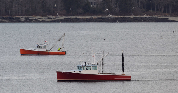 Boats drag for scallops in upper Frenchman Bay near Lamoine on Monday. This was the first day of scallop fishing season, which goes through the end of April 2015.