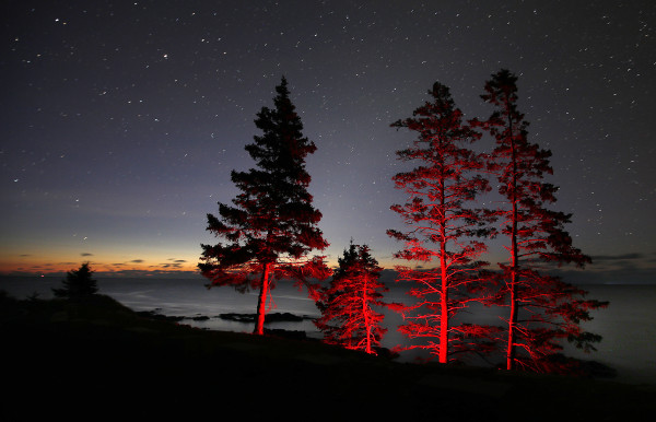 The red light of a hiker's headlamp illuminates spruce trees from below as the first light of dawn colors the eastern horizon in this one-minute time-exposure at Acadia National Park.