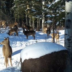 Prioritize protecting deer wintering areas