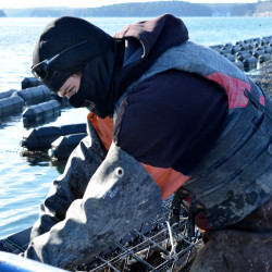 Pacific Northwest's acidifying waters drive oysterman to Hawaii