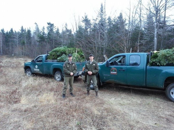 Maine Forest Rangers, shown in November 2014, monitor the taking of evergreen boughs, which requires written landowner permission.