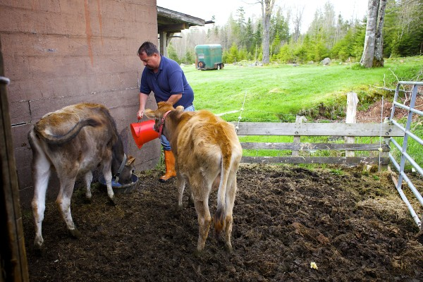 Dan Brown feeds two of his calves milk from cows that he recently milked on Gravelwood Farm in Blue Hill last year.