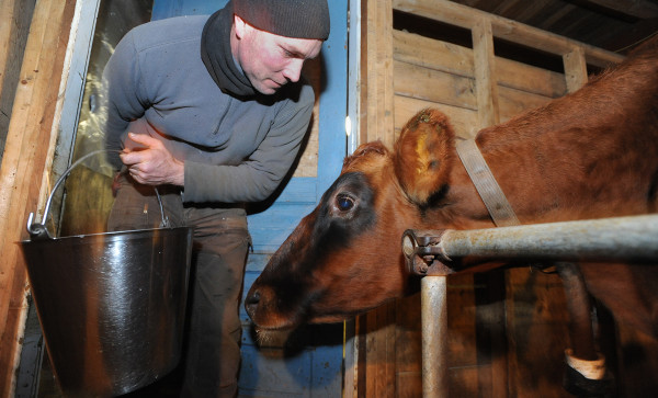 Philip Retberg talks to Teeter as he gets ready to milk the cows at Quill's End Farm in Penobscot on Friday evening.