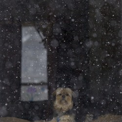 Walter Ryan's dog, Abby, looks out the window of his home on Third Street.