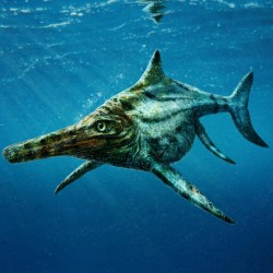 Sea creature fossil found with oldest-known cardiovascular system