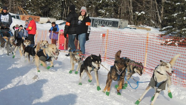 Martin Massicotte of St. Tite, Quebec, winner of the 60-mile race, comes out of the starting gate quickly in Saturday's Wilderness Sled Dog Race in Greenville.