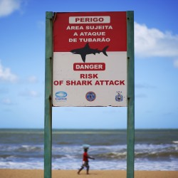 Global fatal shark attacks up in 2011; none were in US