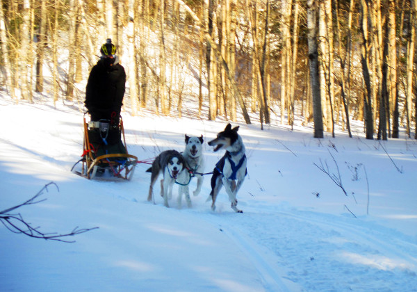BDN visual journalist Ashley L. Conti takes a three-dog sled team for a run around the Rusty Metal Farms trail Friday in Fort Kent.