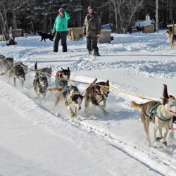 2013 Wilderness Sled Dog Race cancelled