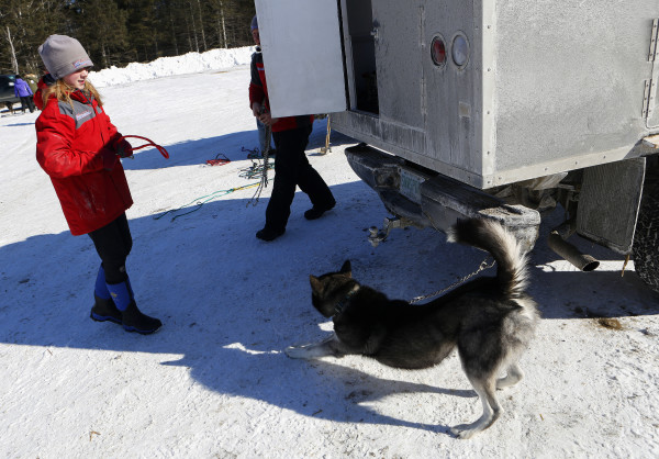 Lara Renner, 12, from Alton, New Hampshire, takes one of her sled dogs, Storm, outside the Lonesome Pine Ski Lodge in Fort Kent Friday. Renner is the youngest musher competing in the Can-Am races this weekend. She is competing in the 30-mile race.