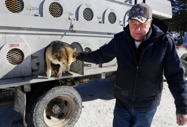 Spencer Thew, 73, from South Colton, New York, takes one of his sled dogs, McTavish, out of his truck outside the Lonesome Pine Ski Lodge in Fort Kent Friday. Thew is the oldest musher competing in the Can-Am races this weekend. He is competing in the 60-mile race.