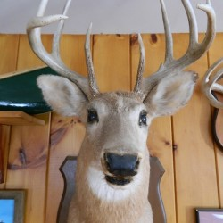 Friday, April 18, 2014: Gerry Hodge, piebald deer, CMP rate increase