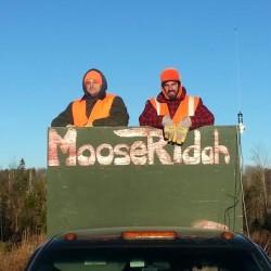 Minnesota moose herd on serious decline