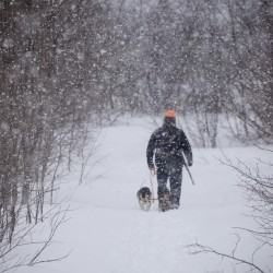 Off-duty game warden Jim Fahey walks his dogs out of the woods after taking them on a snowshoe hare hunt in Maine.