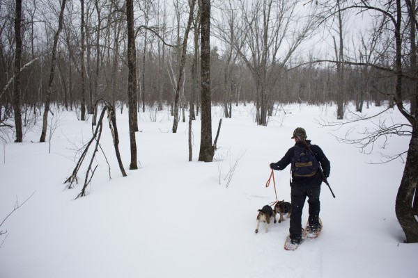 Off-duty game warden Jim Fahey leads his beagles Chum and Scrap into the woods on a snowshoe hare hunt in Maine.