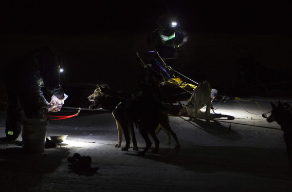 Mushers tend to their dogs during the 2015 250-mile Can-Am Crown International dog sled race at the first check point at Portage Lake Saturday.