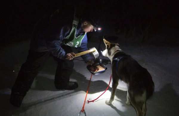 Ashley Patterson feeds her Alaskan huskies during the 2015 250-mile Can-Am Crown International dog sled race at the first check point at Portage Lake Saturday.