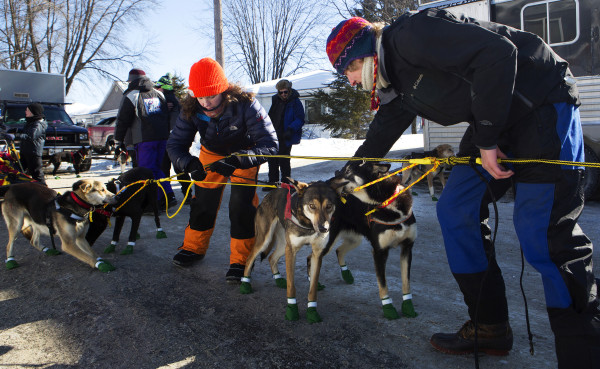 Members of Ashley Patterson's team help line of the 12 Alaskan huskies before the start of the 250-mile Can-Am Crown International dog sled race starting in Fort Kent Saturday.