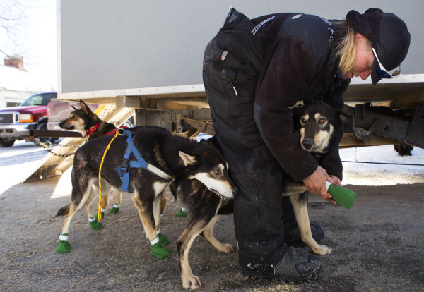 Ashley Patterson puts booties on her Alaskan huskies before the start of the 250-mile Can-Am Crown International dog sled race starting in Fort Kent Saturday.