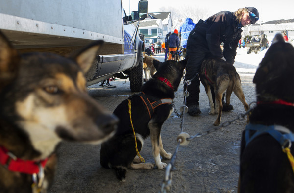 Ashley Patterson puts the harnesses on her Alaskan huskies before the start of the 250-mile Can-Am Crown International dog sled race starting in Fort Kent Saturday.