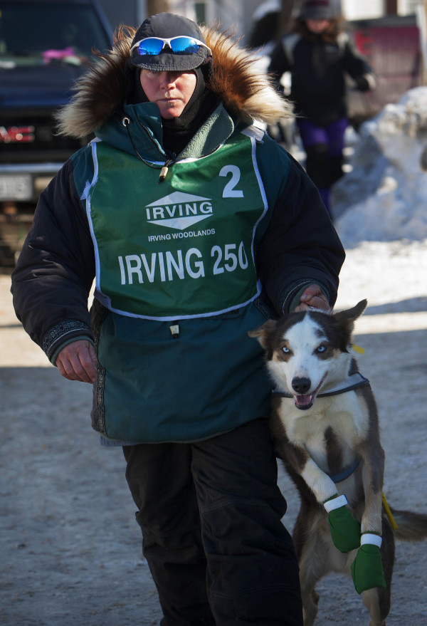 Ashley Patterson brings one of her 12 Alaskan huskies to be hooked up to the sled before the start of the 250-mile Can-Am Crown International dog sled race starting in Fort Kent Saturday.