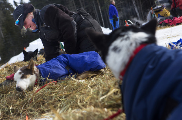 Ashley Patterson tends to her dogs at the third check point of the 250-mile Can-Am Crown International dog sled race at Syl-Ver on Sunday.