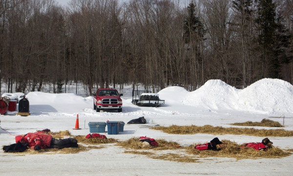 Bruce Langmaid rests with his dogs at the third check point of the 250-mile Can-Am Crown International dog sled race at Syl-Ver on Sunday. Langmaid ended up scratching at this check point.