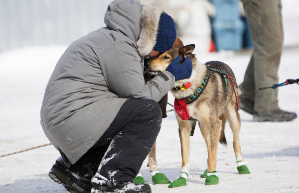 Christine Richardson gives her lead dog a some love at the third check point of the 250-mile Can-Am Crown International dog sled race at Syl-Ver on Sunday.