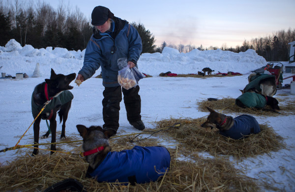 Ashley Patterson feeds her dogs dat the second check point of the 250-mile Can-Am Crown International dog sled race at Rocky Brook on Sunday.