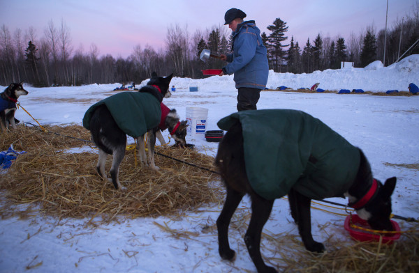 Ashley Patterson feeds her dogs during the 2015 250-mile Can-Am Crown International dog sled race at the second check point at Rocky Brook Sunday.
