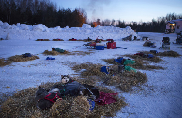 The sunrises as dogs nap at the second check point of the 250-mile Can-Am Crown International dog sled race at Rocky Brook on Sunday.