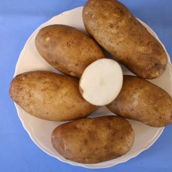 UMaine's new potato pops up at Vegas expo