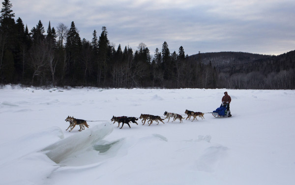 Denis Tremblay mushes his team across the Allagash River during the 2015 250-mile Can-Am Crown International dog sled race toward the fourth check point at Allagash on Sunday.
