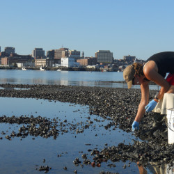 Shellfish harvesters plagued by acidic 'dead muds'