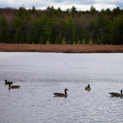 LePage tells lawmakers he'll release $5 million in conservation bonds