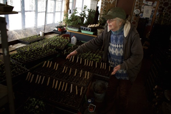 Lois Labbe moves around seedlings at her and Tom Roberts' farm, Snakeroot Organic Farm, in Pittsfield recently.