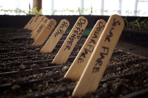 Seedlings grow at Snakeroot Organic Farm in Pittsfield recently. Owner Tom Roberts shared tips on starting and keeping a garden.