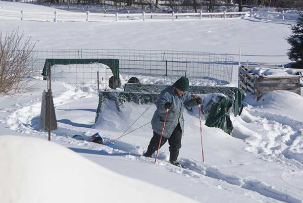 Jj Starwalker does winter chores by snowshoe on her farm in Corinth.