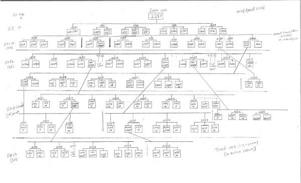Sara's family chart